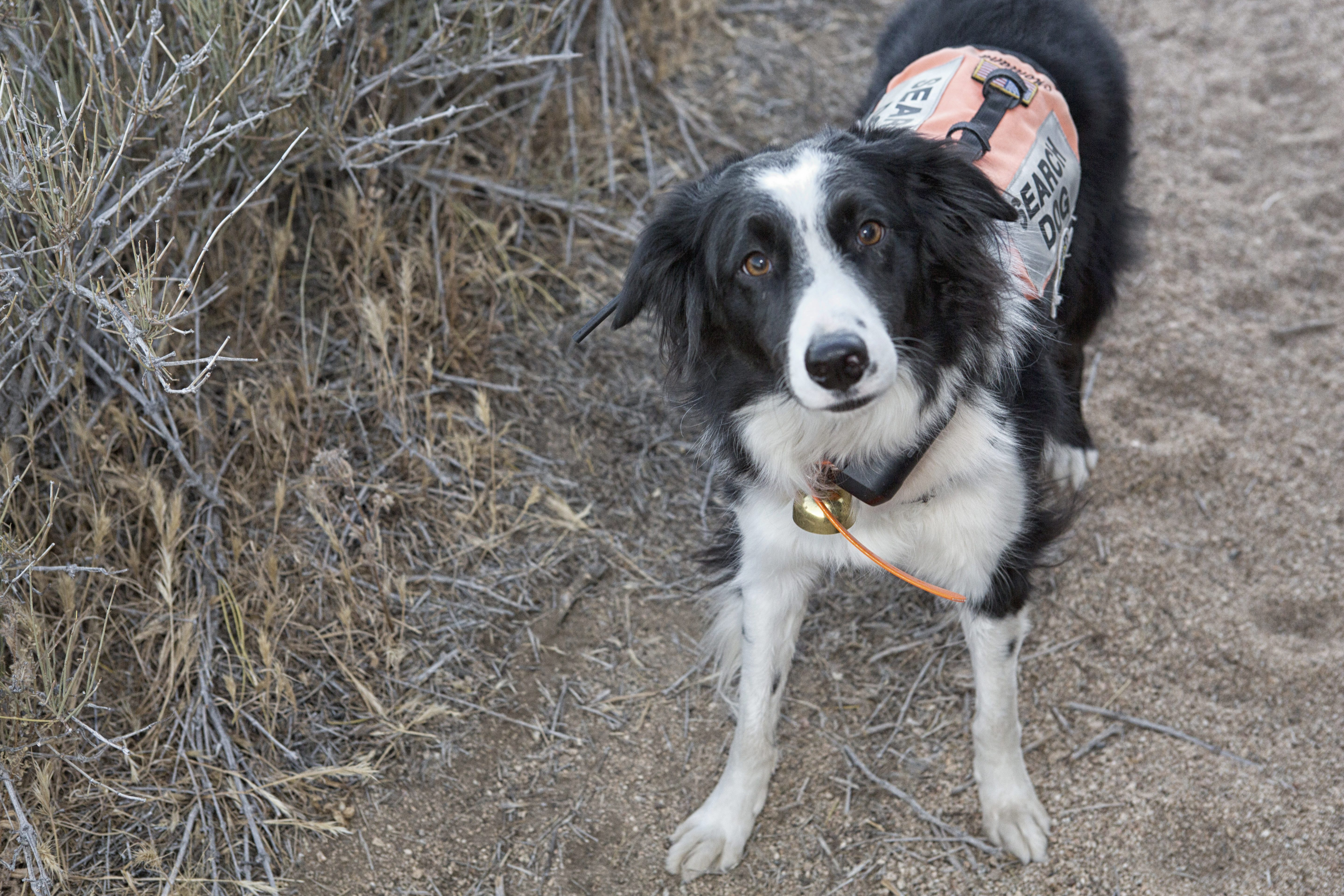Search and Rescue Dog, Montana at beginning of search